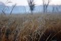 Картинка роса, травинки, в поле, тоненькие, туманное утро.