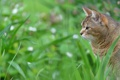 Картинка кошка, трава, размытость