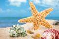 Картинка песок, пляж, лето, ракушки, морские ракушки