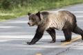 Картинка дорога, фон, медведь
