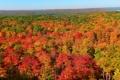 Картинка осень, лес, небо, деревья, горизонт