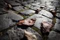 Картинка камни, осень, дорога, листва, макро, сухая