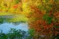 Картинка осень, листья, деревья, пруд