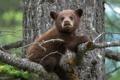 Картинка природа, дерево, медведь