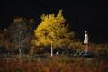 Картинка осень, девушка, дерево