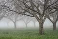 Картинка трава, деревья, природа, дерево, нежность, леса, красивые обои