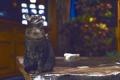 Картинка кошка, фон, смотрит, котэ