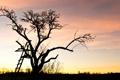 Картинка деревья, фото, дерево, обои, пейзажи, вечер
