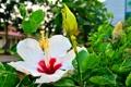 Картинка Nature, Flower, macro