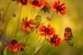 Картинка зелень, макро, яркие, растения, лепестки, оранжевые, снимок