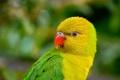 Картинка птица, перья, клюв, попугай