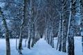 Картинка холод, зима, дорога, снег, деревья, природа, ветви