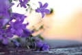 Картинка фото, колокольчики, обои, растения, природа, фон, wallpapers