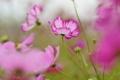 Картинка поле, цветы, лепестки, стебель, луг