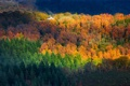 Картинка осень, лес, свет, деревья, дом, склон