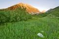 Картинка кустарник, яркая, трава, горы, зелень, цветы