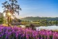 Картинка солнце, лучи, свет, деревья, цветы, горы, озеро