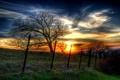 Картинка лето, пейзаж, закат, дерево, забор