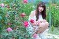 Картинка взгляд, девушка, цветы, лицо, волосы, розы