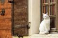 Картинка кошка, стена, окно