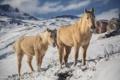 Картинка зима, Анды, снег, лошади, горы