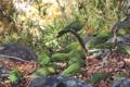 Картинка листья, ветки, камни, Изумрудный попугай