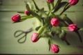Картинка бутоны, букет, тюльпаны