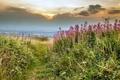 Картинка небо, трава, пейзаж