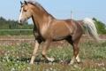 Картинка лошадь, трава, конь