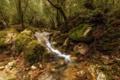Картинка лес, природа, река