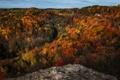 Картинка осень, лес, небо, деревья, скала