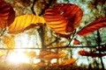 Картинка листья, осень, фото, осенние обои, макро картинки, дерево