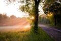 Картинка дорога, свет, дерево