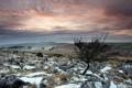Картинка поле, снег, пейзаж, камни, дерево