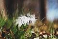 Картинка трава, макро, перо
