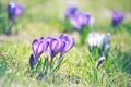 Картинка зелень, трава, макро, свет, цветы, природа, весна