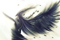 Картинка арт, крылья, перья, рисунок, ангел