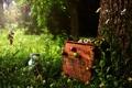 Картинка лето, дерево, яблоки, ящик