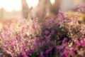 Картинка лето, макро, цветы, поляна, полевые