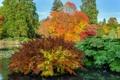 Картинка осень, деревья, пруд, парк, Великобритания, кусты, Sheffield Park Garden