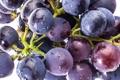 Картинка синий, ягоды, berry, виноград, гроздь, blue, Grapes