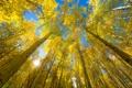 Картинка осень, небо, листья, деревья, природа, солнышко