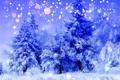 Картинка холод, зима, лес, снег, деревья, пейзаж, синий