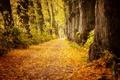 Картинка осень, листья, деревья, парк, путь, мужчина