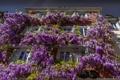 Картинка небо, цветы, дом, окна, глициния