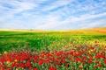 Картинка природа, пейзаж, засеянное поле, небо, цветы