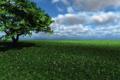 Картинка поле, трава, облака, цветы, дерево, тень, арт