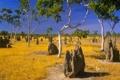 Картинка небо, трава, деревья, листва, муравьи, саванна, африка