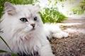 Картинка кошка, лето, взгляд