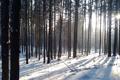 Картинка зима, лес, снег, сугробы, лучи солнца